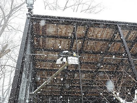 札幌円山動物園 北海道 冬 雪 鳥