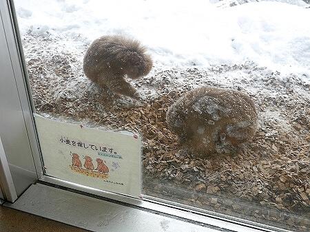 札幌円山動物園 北海道 冬 雪 サル