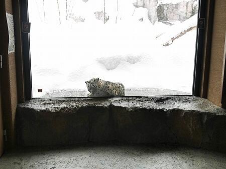 札幌円山動物園 北海道 冬 雪 ユキヒョウ
