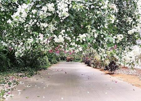 宮古島旅行記 ユートピアファーム 雨の日 観光 ブログ 農園 ブーゲンビレア
