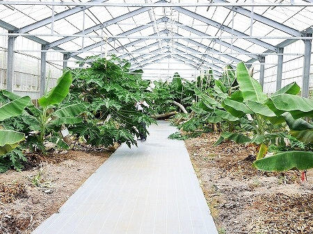 宮古島旅行記 ユートピアファーム 雨の日 観光 ブログ 農園
