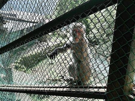 鬼怒川温泉ロープウェイでおさるの山へ 行き方・料金 鬼怒川温泉旅行記 ブログ シャトルバス乗り場 エサやり